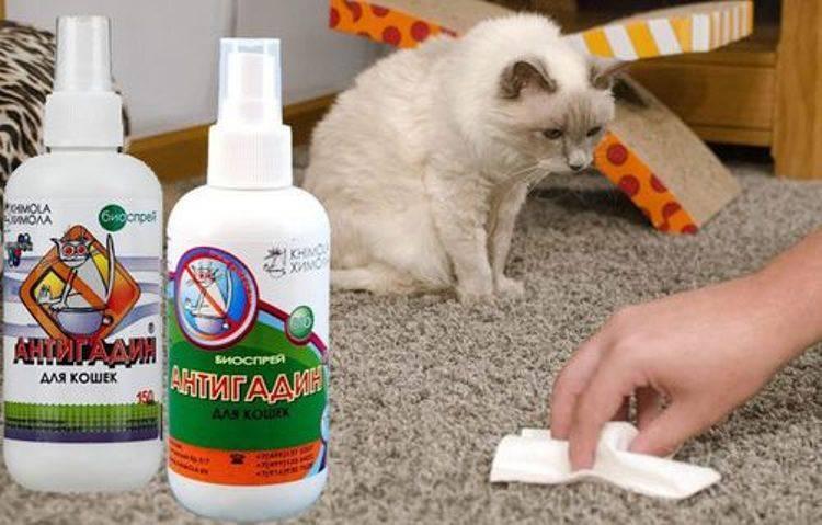 Советы, как отучить кота царапать мебель и обои