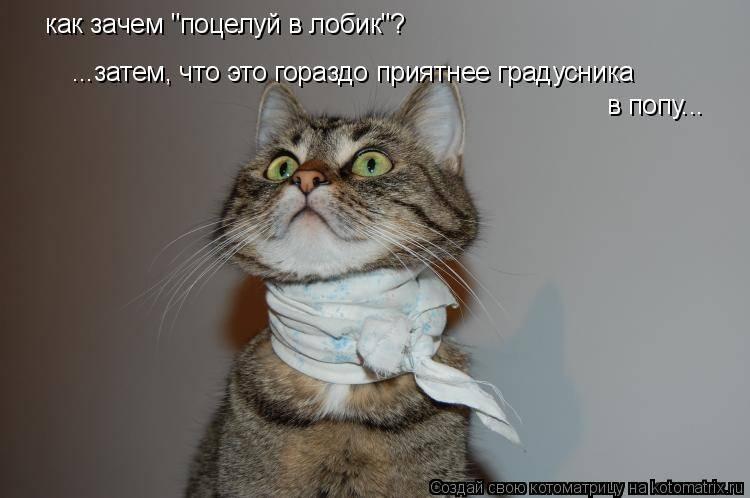 Кошка постоянно просит есть и орет, но не наедается