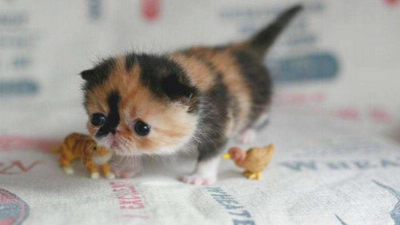 Маленькие животные: топ-20 самых мелких млекопитающих