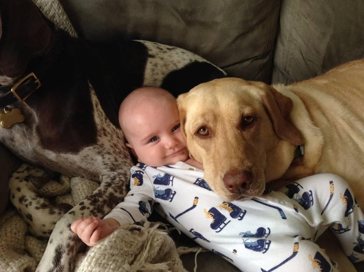 Лучшие собаки для детей: какие породы подойдут идеально | lisa.ru