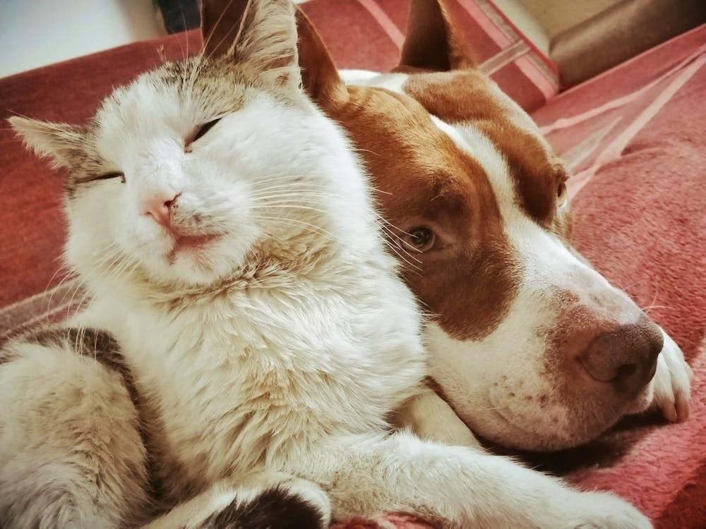 Умеют ли животные смеяться?