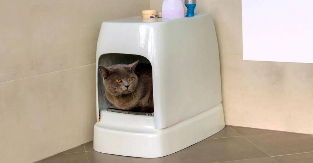 Как отучить котенка гадить в неположенном месте: быстро и просто