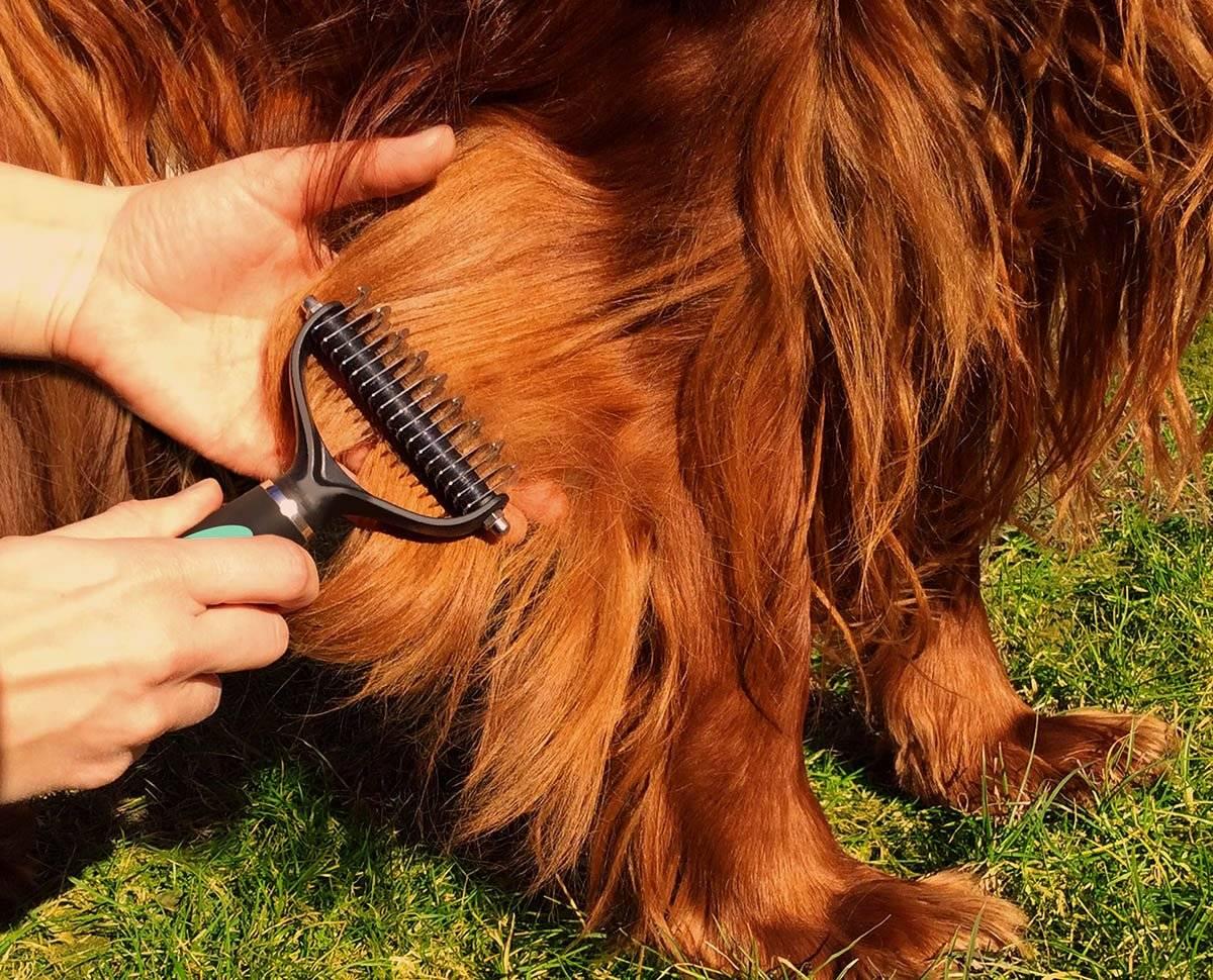 Уход за короткошерстными собаками в домашних условиях