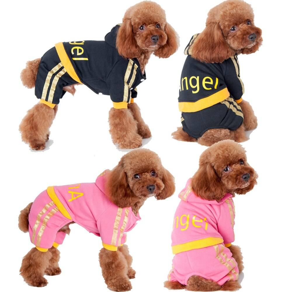 Одежда для собак: каким породам нужнаи как правильно выбрать