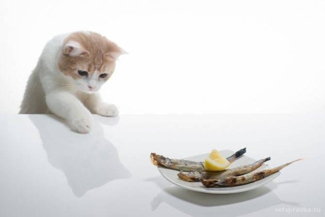 Вредная еда для кошек - чем нельзя кормить кошек, можно ли кормить кошку рыбой и сырым мясом - всё о кошках и котах