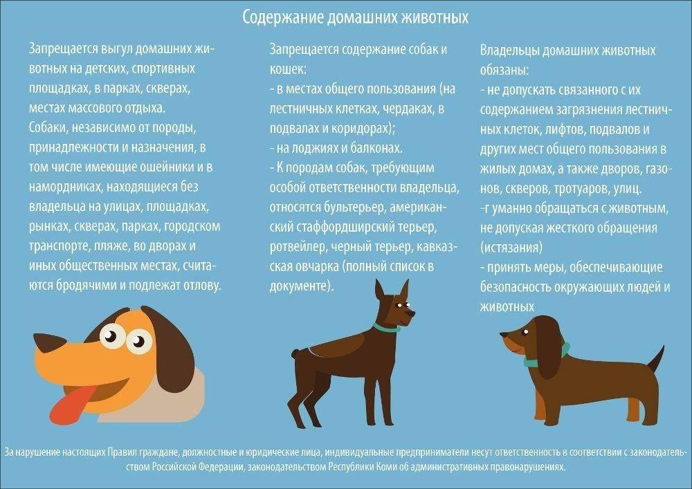 Что делать, если пропала собака, кошка или другой домашний питомец?