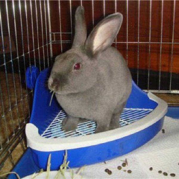 Приучаем кролика ходить на лоток