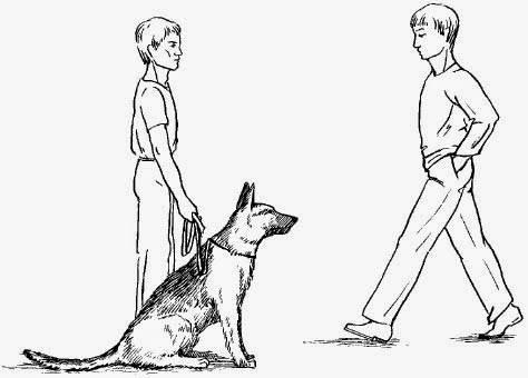 Техника обучения щенков и взрослых собак запрещающим командам нельзя и фу