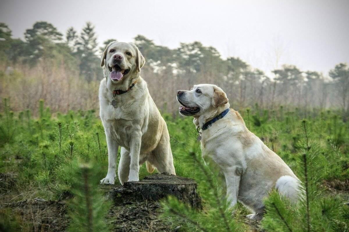 Породы собак для городской квартиры