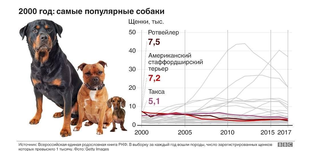 Самые дорогие породы собак в мире - топ 15