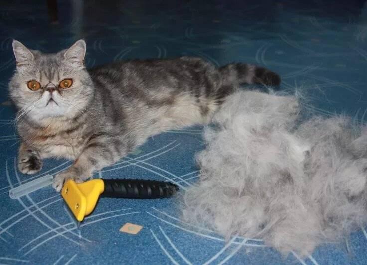 Кошка сильно линяет. что делать?
