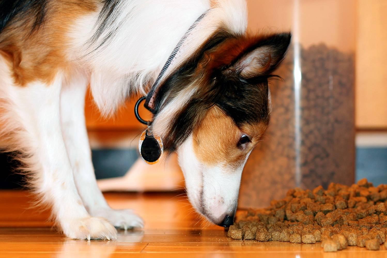 Сколько собака может прожить без еды?
