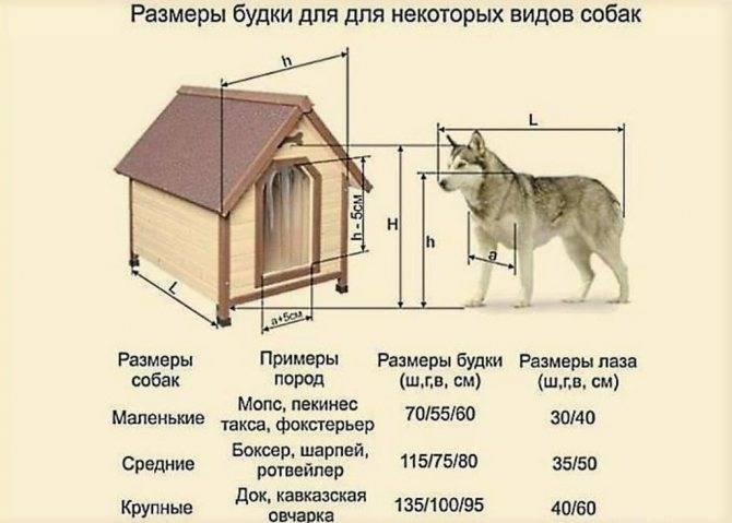 Как построить вольер и будку для кавказской овчарки своими руками
