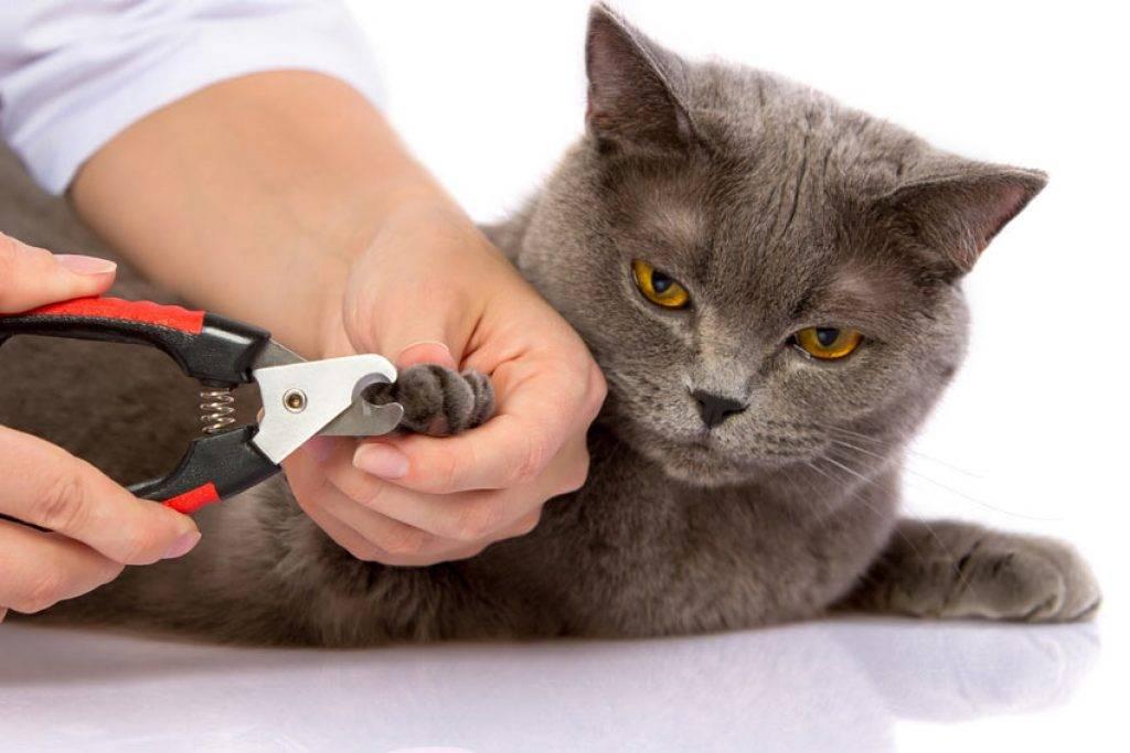 Как правильно подстригать когти кошке: правила стрижки и необходимый инструмент в домашних условиях