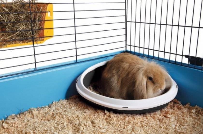 Как приучить кролика к лотку: фото и видео про туалет для декоративного питомца