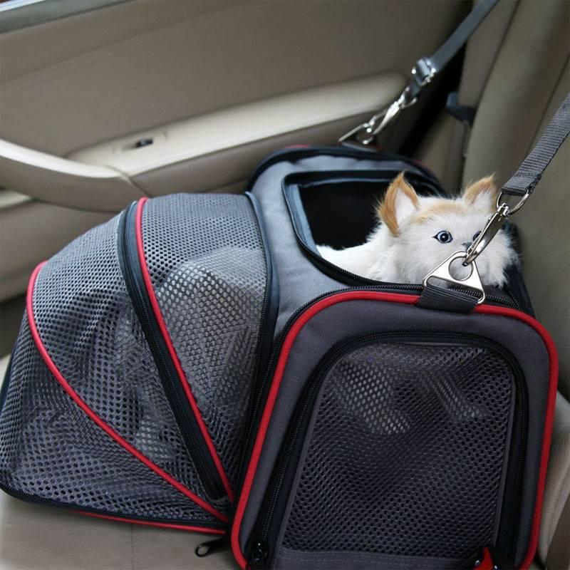 Существует ли штраф за неправильную транспортировку животных в салоне автомобиля