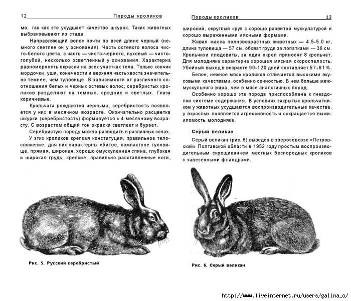Кролики великаны: разведение, выращивание, кормление