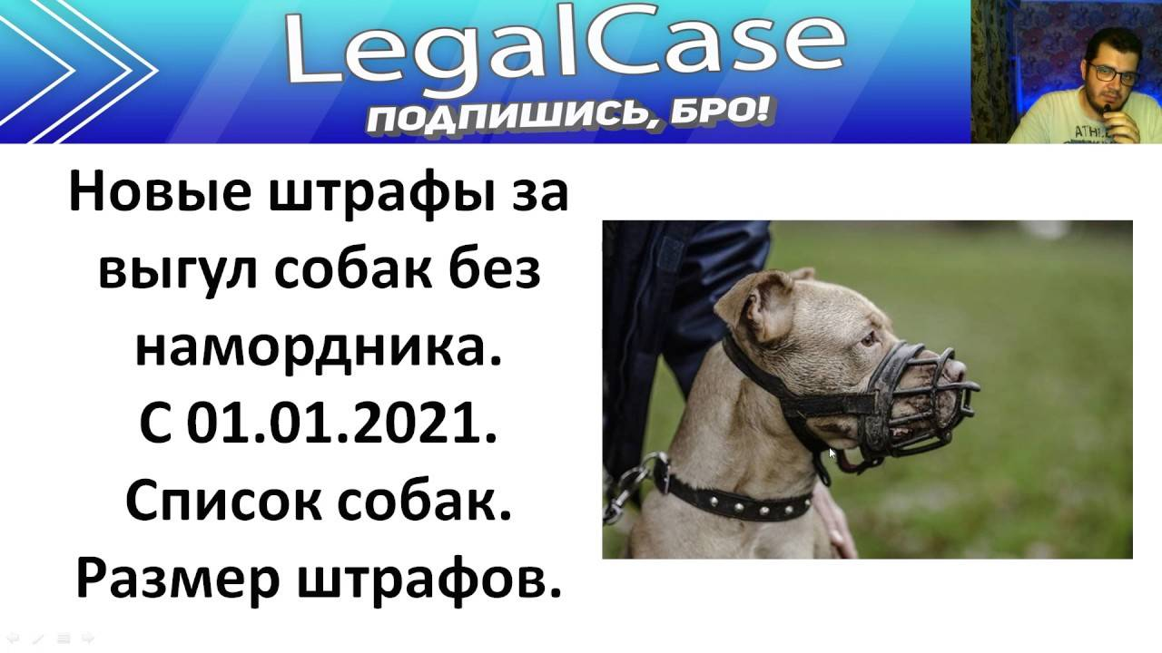 Выгул собак без намордника закон, размер штрафа, куда обращаться