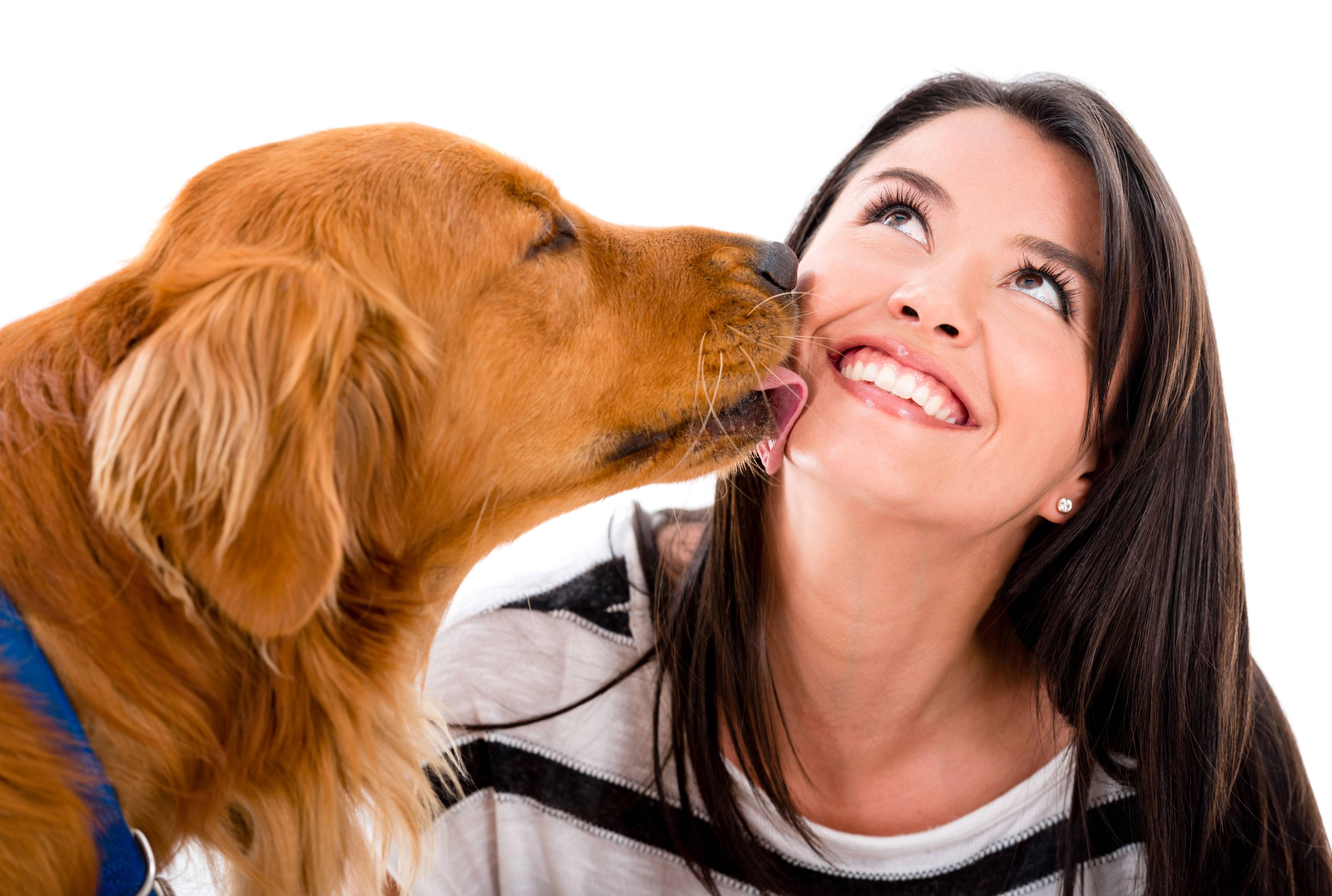 Улыбающаяся собака – могут ли собаки улыбаться?