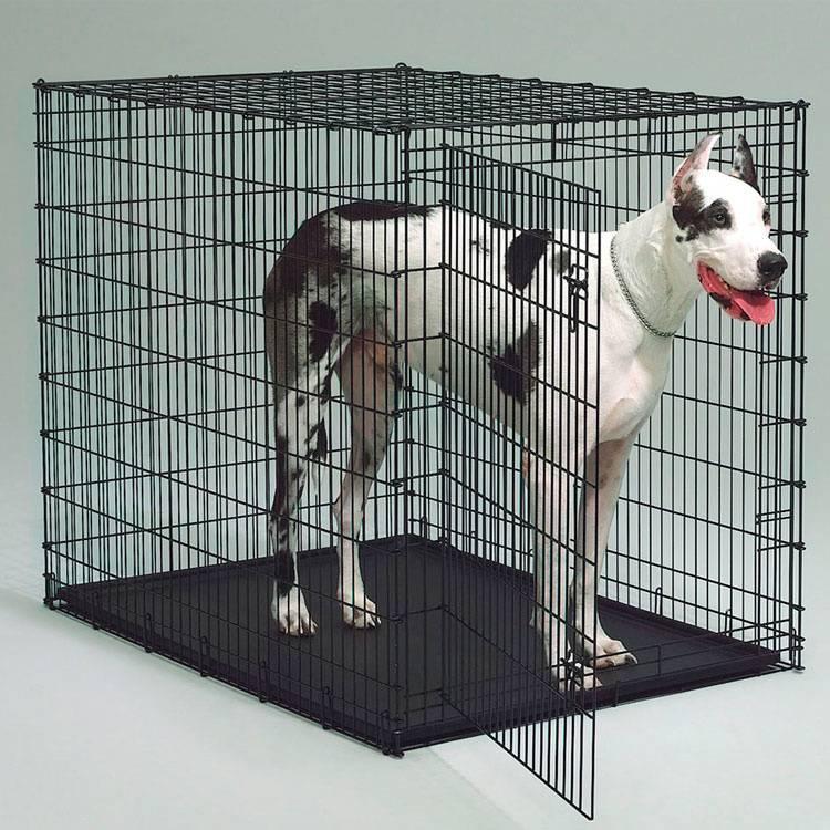?как выбрать и установить вольер для собаки в квартире - блог о строительстве
