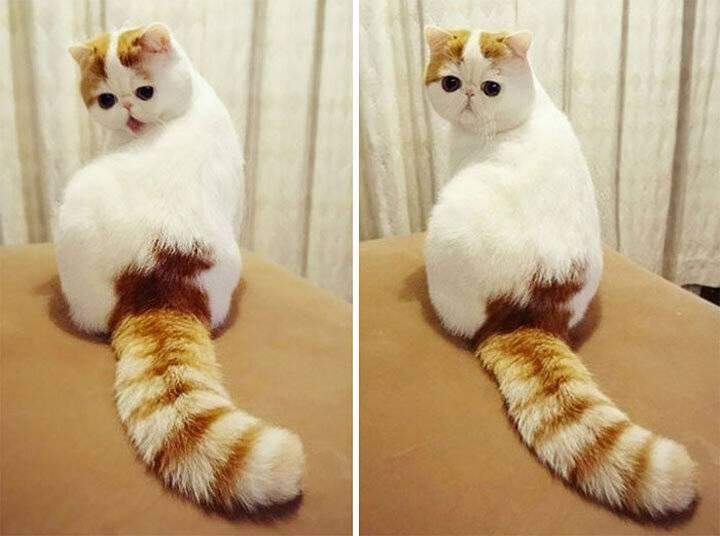 Топ-10 самых красивых пород кошек в мире на фото