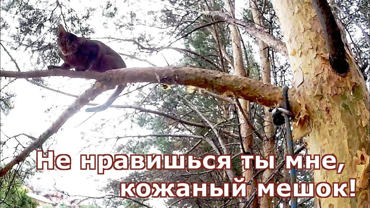 Основные варианты, как снять кота с дерева самостоятельно и с помощью служб