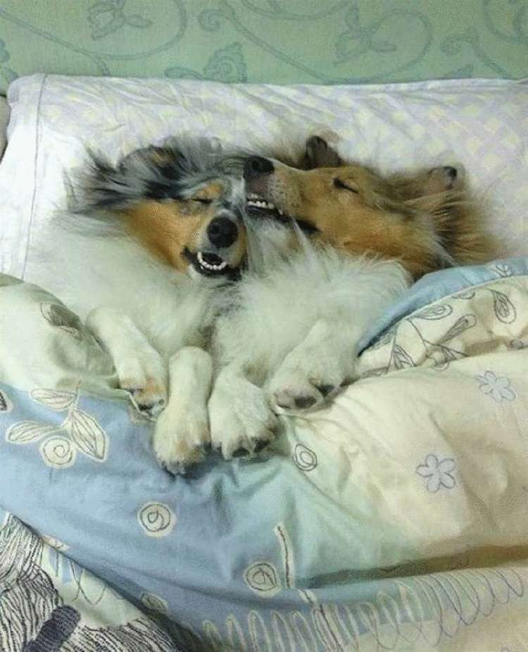 Почему собаки любят спать с хозяином: объяснения опытных заводчиков
