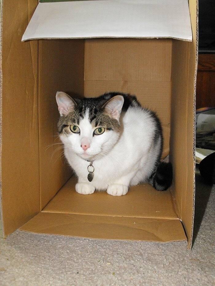 По каким причинам кошки любят и залезают в пакеты и картонные коробки