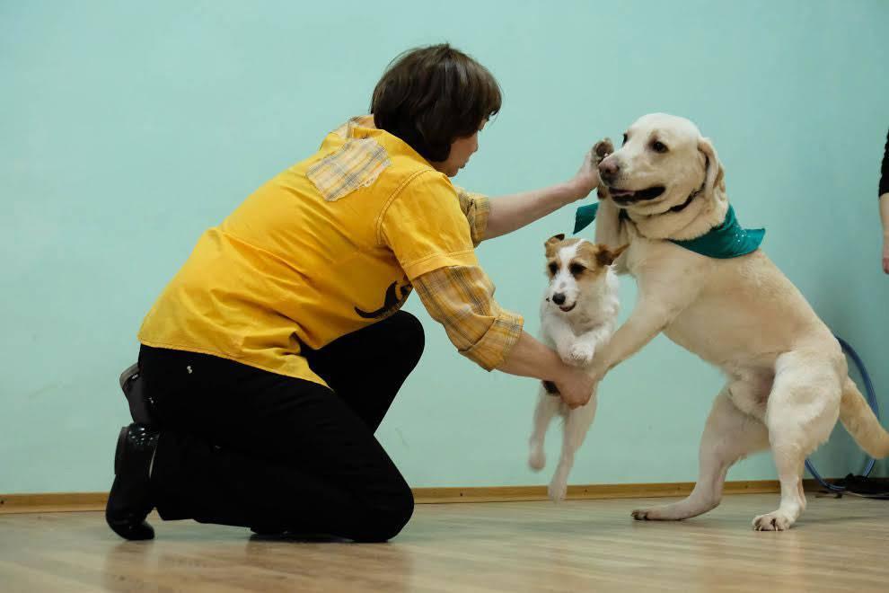Лабрадор: уход и содержание, кормление щенка, дрессировка лабрадора в домашних условиях