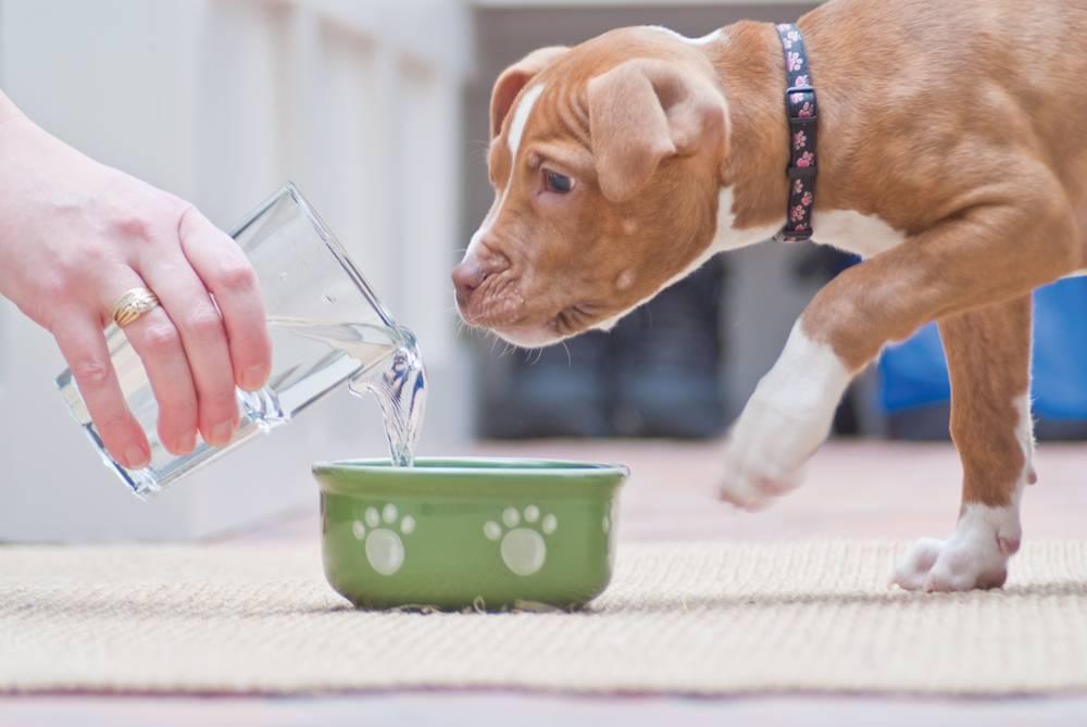 Что делать, если собака плохо ест?