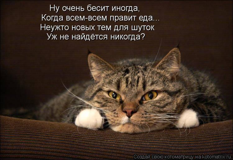 7 вещей, за которые ваша кошка вас ненавидит :: инфониак