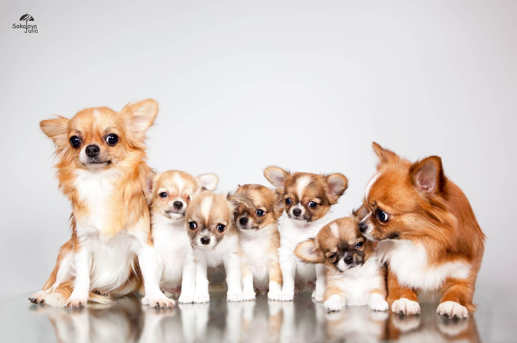 Самые дешевые породы собак: описание, названия и фото