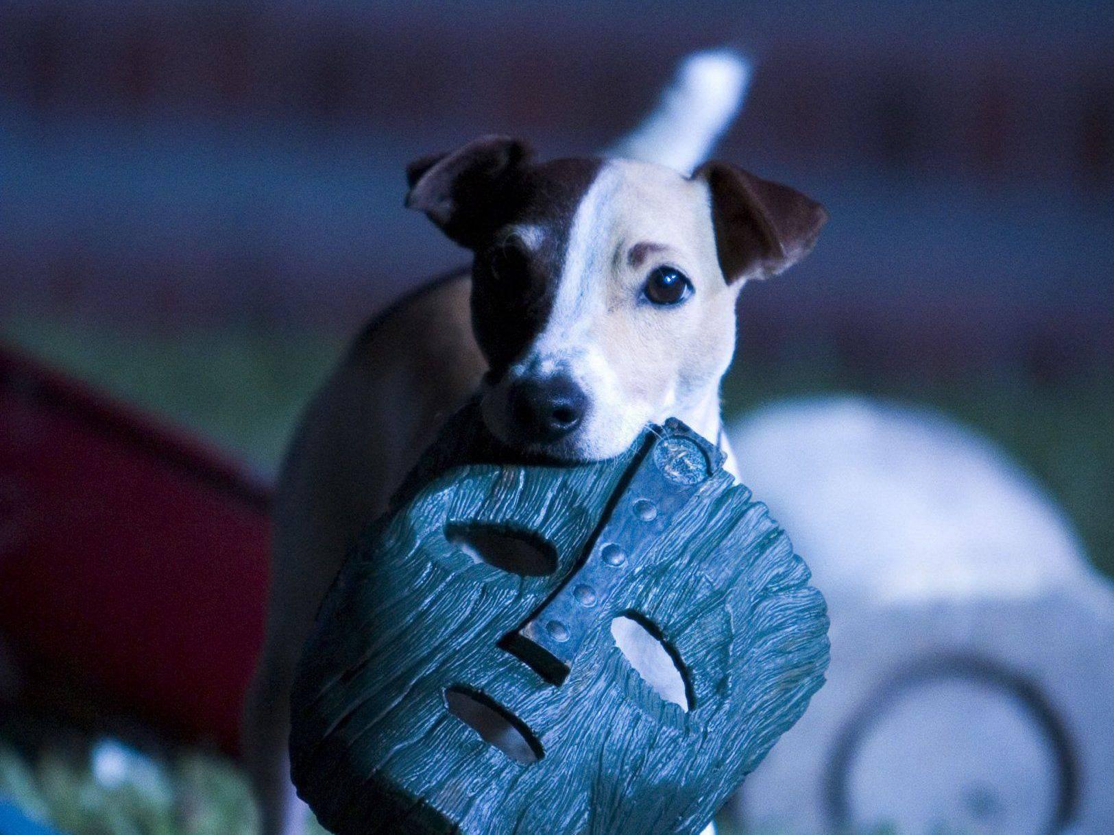 Какая порода собаки майло из фильма маска?