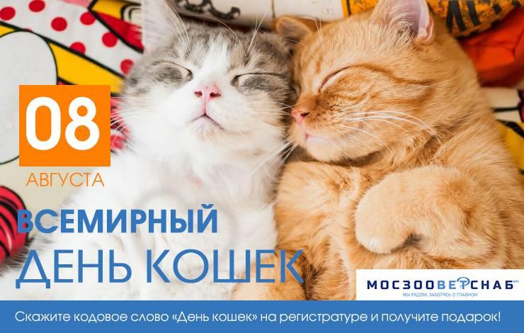 День кошек: как и когда его празднуют в разных странах мира -