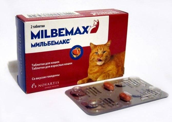 Мильбемакс для кошек и котят: инструкция по применению, показания и противопоказания, аналоги, отзывы
