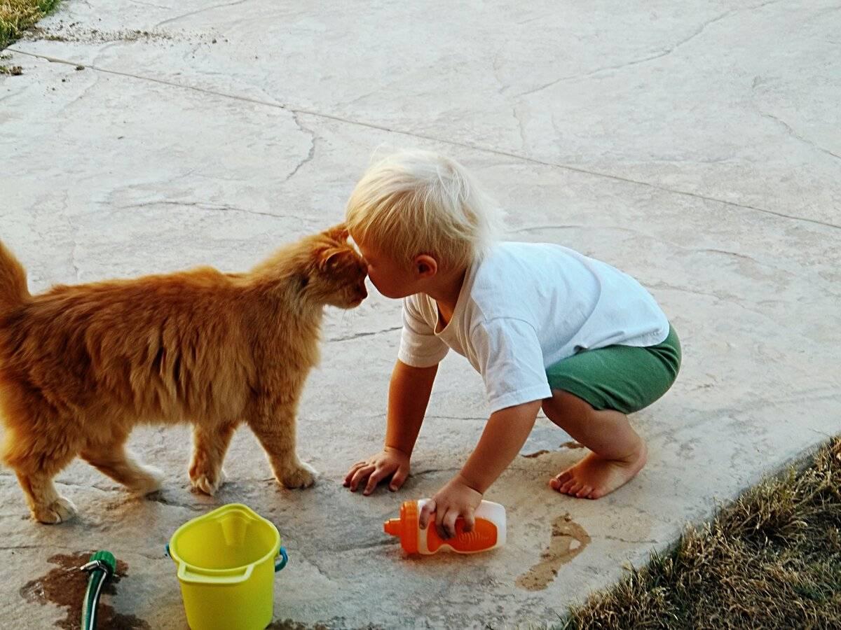 Действительно ли нужна вторая кошка в доме — 4 лапки