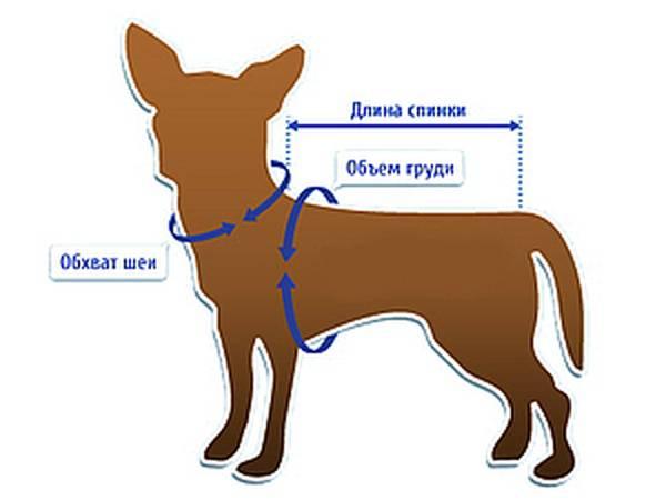 Всё лучшее для братьев наших меньших: как подобрать на алиэкспресс одежду нужного размера для собак