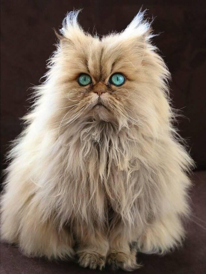 Породы кошек с фотографиями и названиями