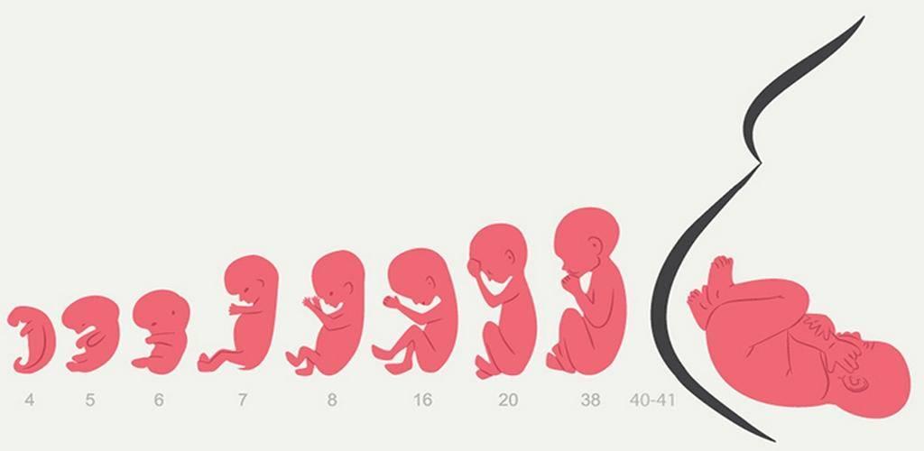 Беременность кошки: что должен знать владелец?