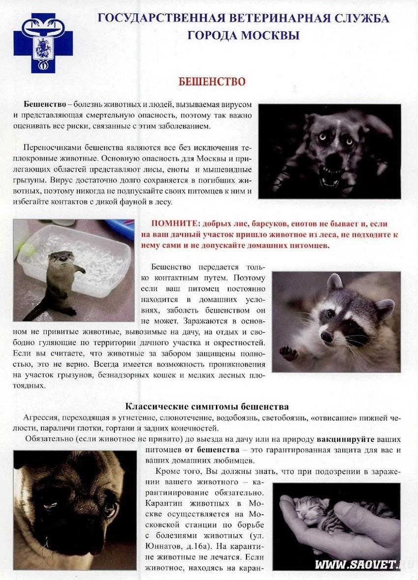 Симптомы бешенства у кошек. признаки бешенства у кошек и меры его профилактики   ветпрактика