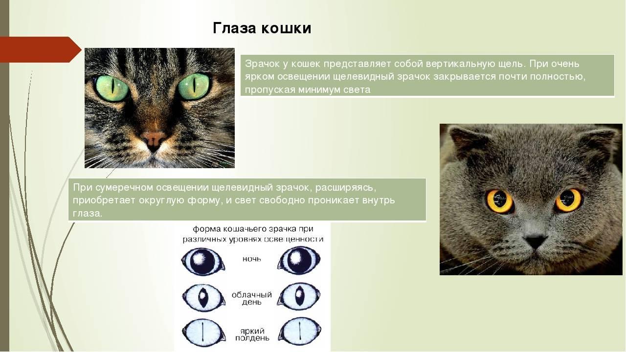 Как видят кошки и коты наш мир