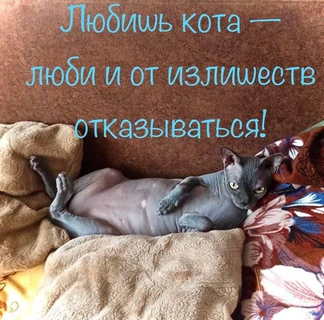 Кошки способны отличать плохих людей от хороших: как они это делают