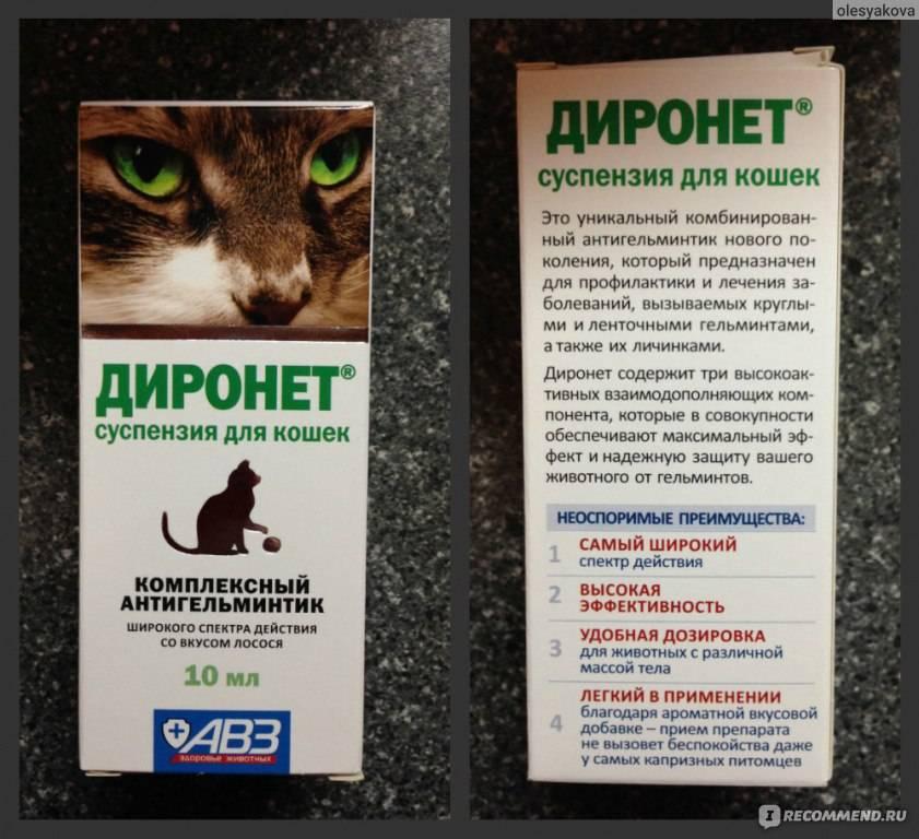 Диронет спот-он для кошек: инструкция по применению, показания и противопоказания, отзывы, аналоги