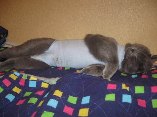 Попона для кошки после стерилизации: своими руками | фото, цена
