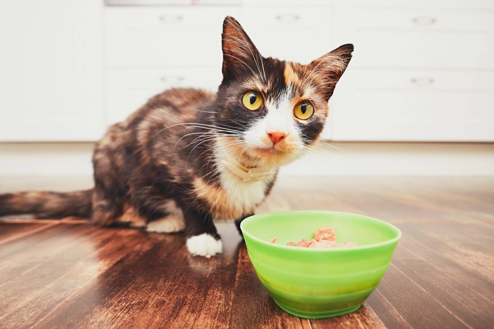 Тревожные сигналы: почему кошка не ест и не пьёт в течение нескольких дней