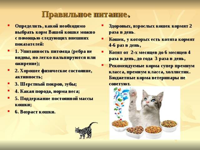 Чем и как правильно кормить котенка?