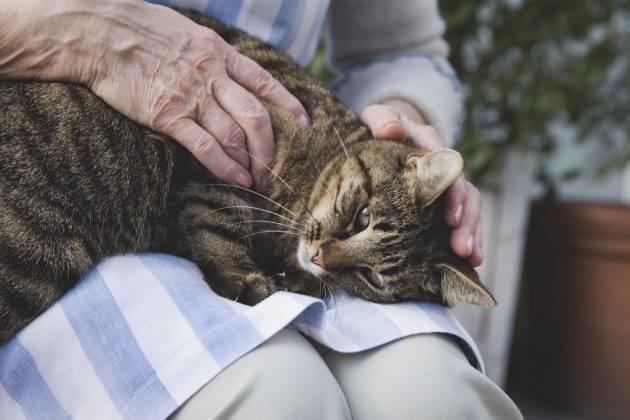 Старая кошка - особенности содержания и ухода