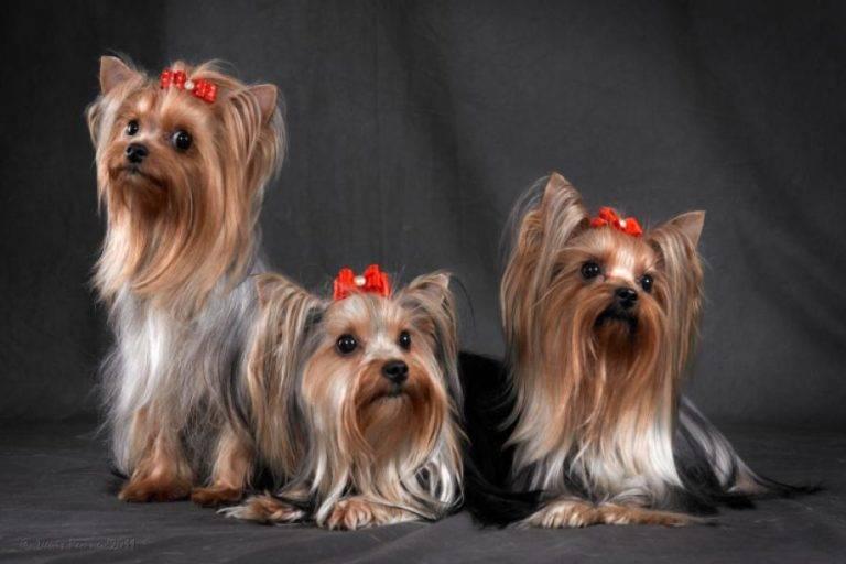 Как назвать ягдтерьера: список красивых имен для собак мальчиков и девочек.