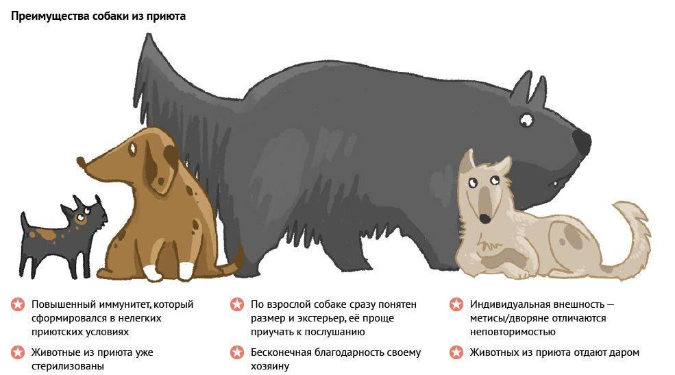 Приюты для животных вмоскве