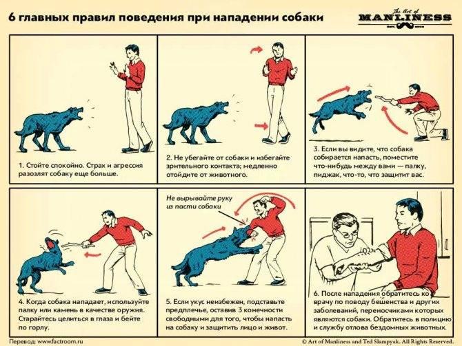 """Правильно приучаем щенка к клетке. свобода для владельца и своё """"логово"""" для щенка."""
